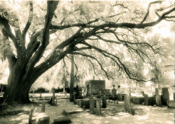 Circular IR Film by Walter Sallenger, graveyard with large tree overlooking