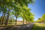 Francis Marion hosts campus tours throughout the summer