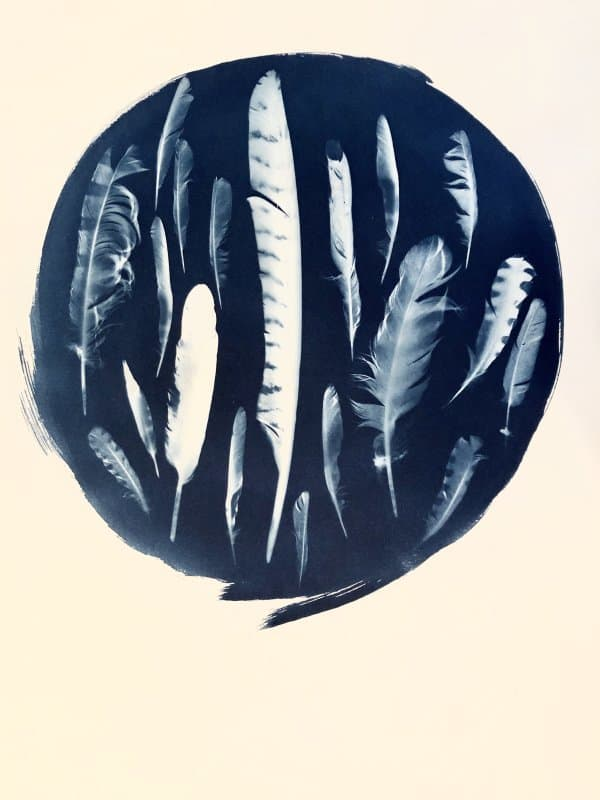 Laurie Schorr Cyanotype