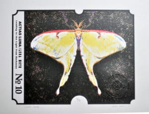 A serigraph depicting a brightly colored moth.
