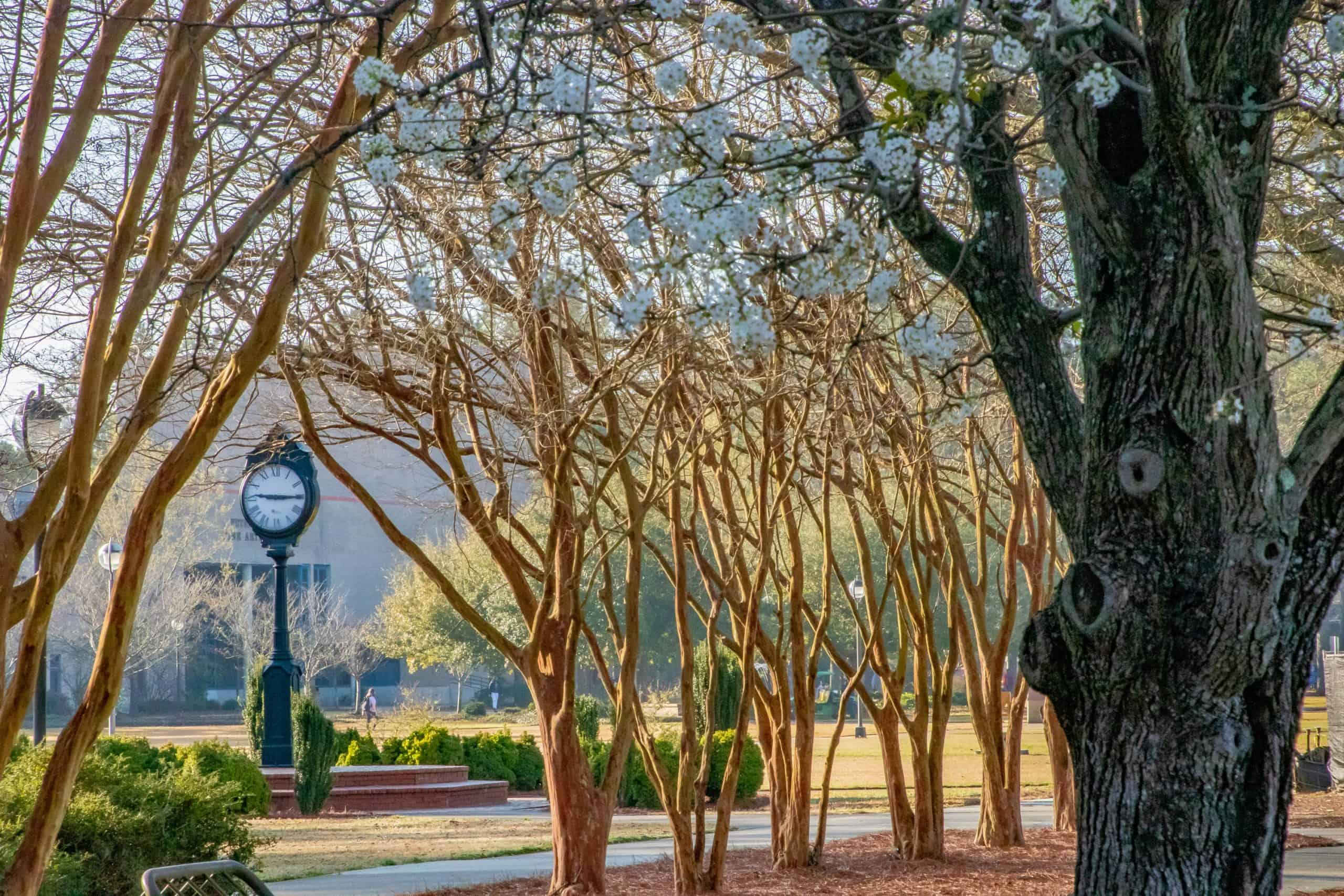 Trees at FMU